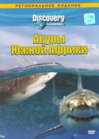 Акулы-Южной-Афкики